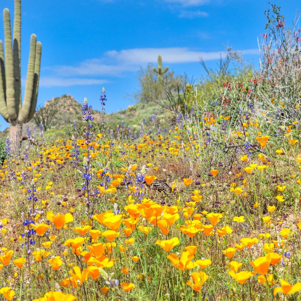 Desert Bloom In Palm Springs