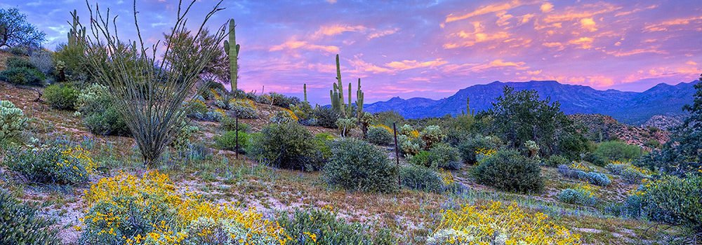 Be Sure To See The Desert Bloom This Spring