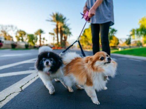 Pet Friendly Amenities